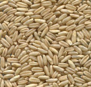 5 Beneficios de la avena que la convierten en un súper cereal