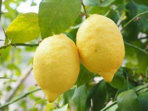 Propiedades del limón: 7 beneficios para tu salud