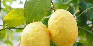 Propriedades del limón